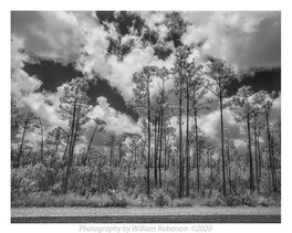 Alligator Alley #2