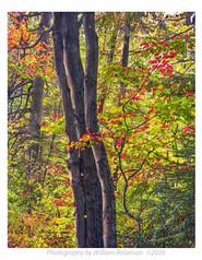 Trail to Roaring Brook Falls