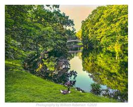Ducks, Vanderbilt Estate