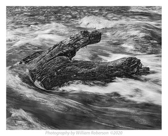 Log, Niagara Rapids