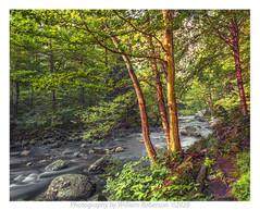 West River Trail, Ausable #2