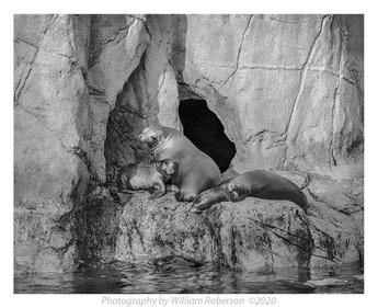 Seals, Bronx Zoo