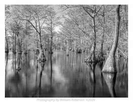Cypress Swamp #2