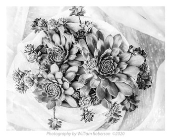 Succulents on White #5