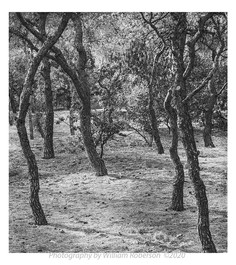 Hillside near Acropolis
