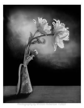 Ranunculus #5