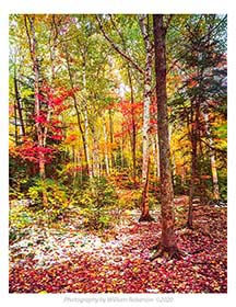Autumn Snowfall, Adirondacks.jpg