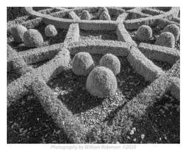 Untitled (Brooklyn Botanic Garden) #4