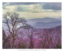 Blue Ridge #4