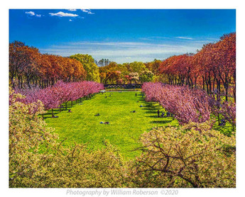 Cherry Tree Esplanade, BBG
