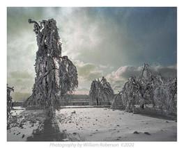 Trees, Frozen Mist, Niagara #3