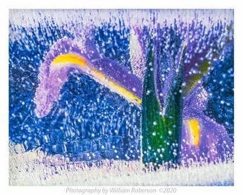 Iris, Ice #2