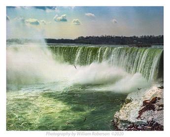Gulls, Horseshoe Falls