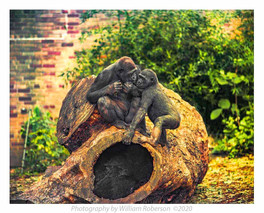 Gorillas, Bronx Zoo