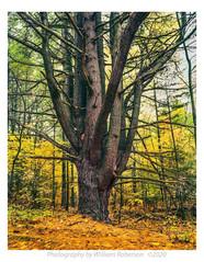 Tree, Autumn