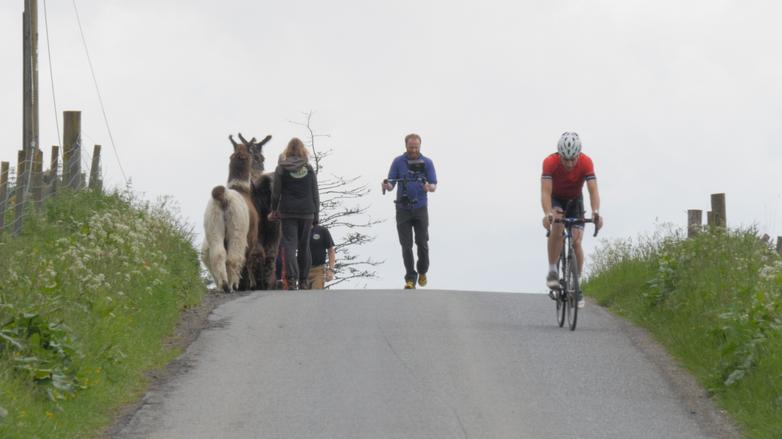 lamas-filming-cycling.png