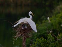 shading the nest