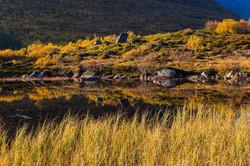 fall colors Flakstadøya