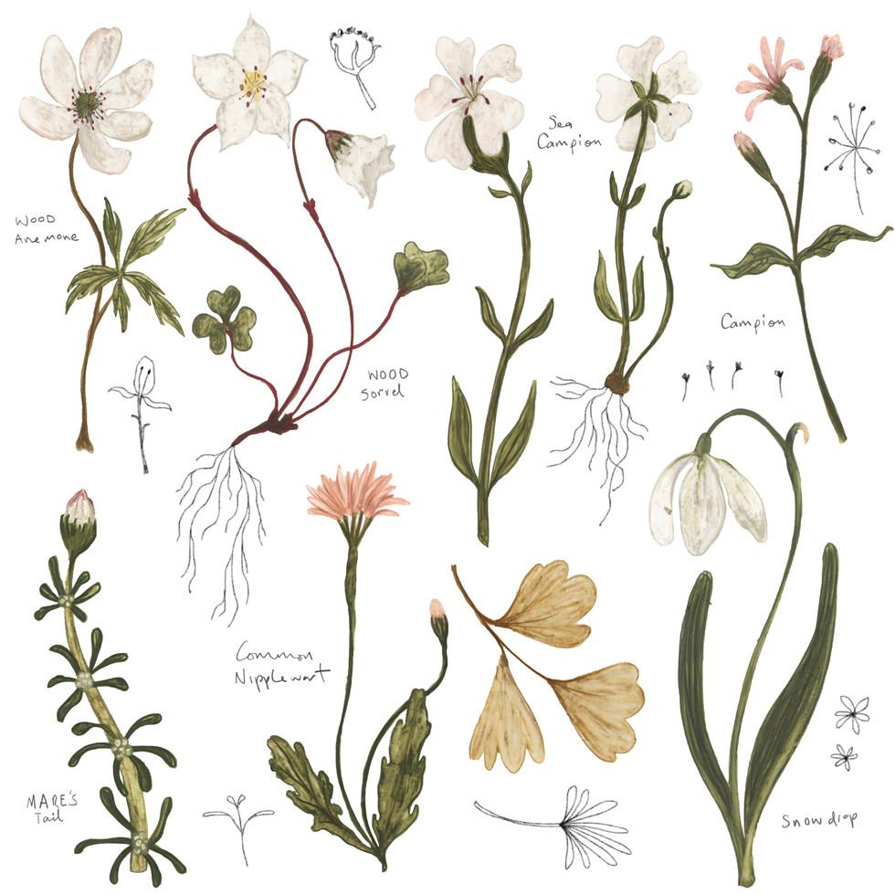 flower specimens no.1