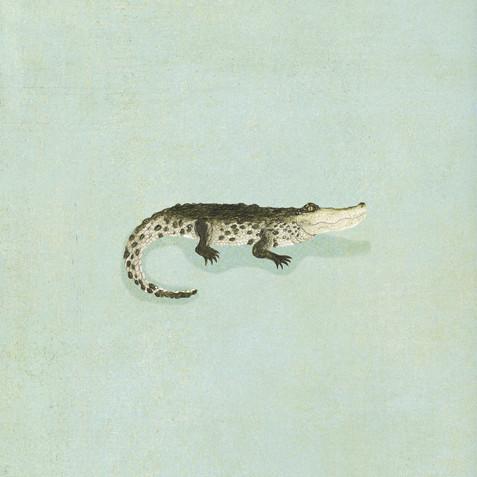 Dorothy's crocodile