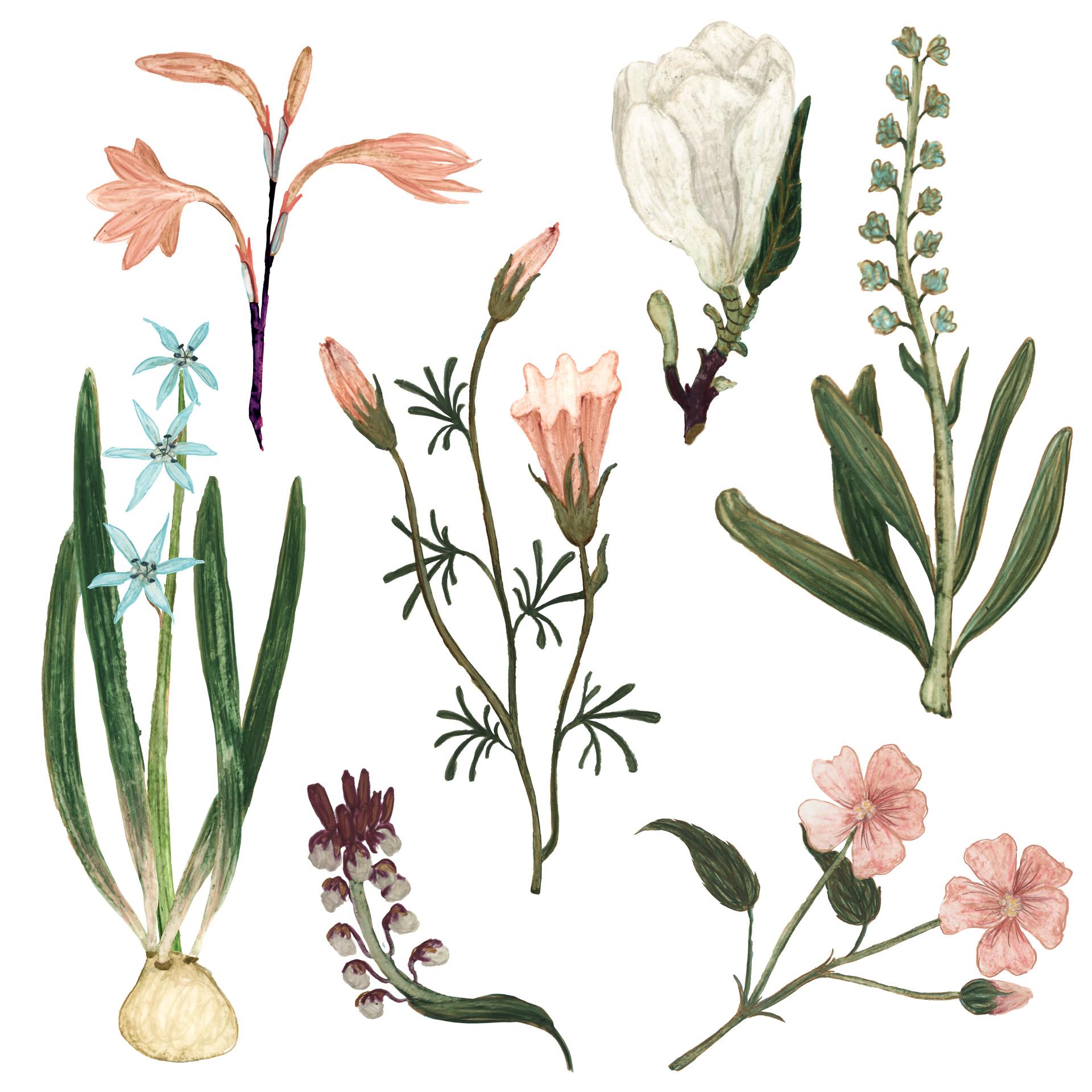 flower specimens no. 2