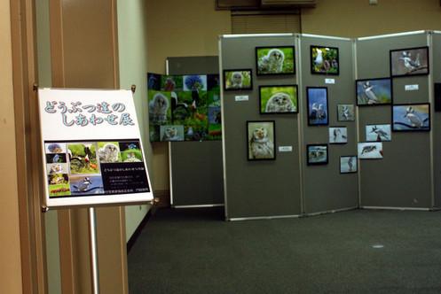 動物たちのしあわせ展 門脇俊照  Happiness of the animals Exhibition Toshiteru Kadowaki