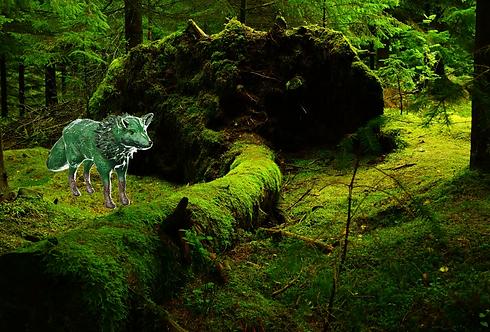 Fox Paint.png