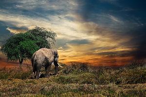 elephant-2729413_960_720.jpg
