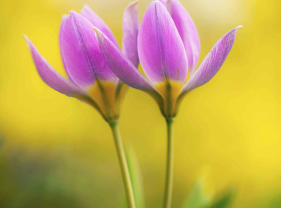 Spring-Duet.jpg