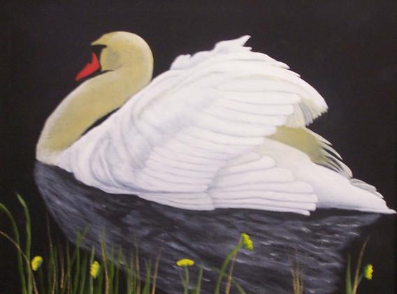 White-Swan-14x18.jpg
