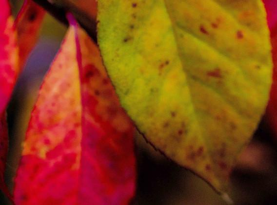 Autumn-Delight.jpg