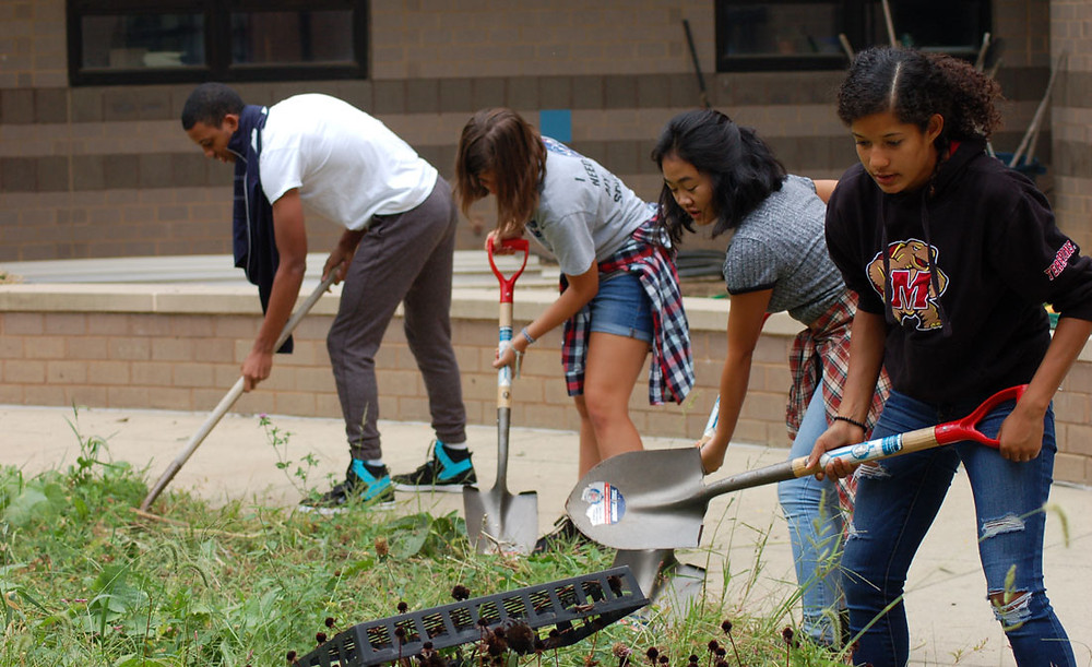 Students cutting up weeds