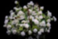 004_edited.jpg
