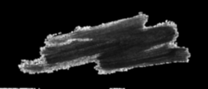 mascara-vector-brush-stroke-6_edited.png