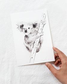 koala watercolour