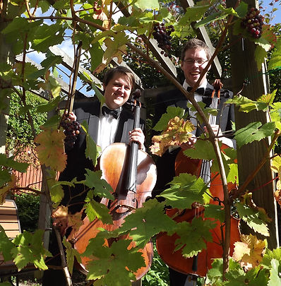 Two Cellos in vines