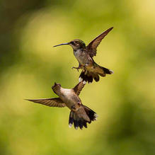 Hummers-7-9-AfterLunch-274c.jpg