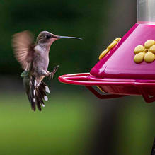 Hummers-SupperTime-7-2-1031c.jpg