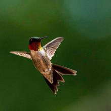 Hummers-4-25-AfterLunch-311c.jpg