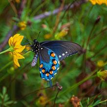 Butterflies-7-28-BeforeLunch-78c.jpg