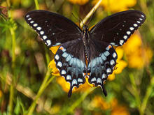 Butterflies-House-7-25-55c.jpg