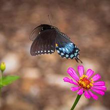 Butterflies-7-26-Lunchtime-47.jpg
