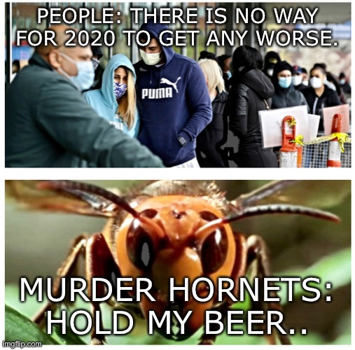 "Meme: ""2020 Can't get worse."" Photo of a large Asian hornet, and caption saying ""Hold my Beer."""