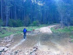 Ruta del Arroyo de la Madera