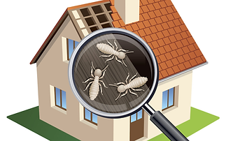 termite-inspection.png
