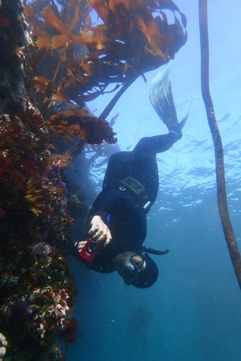 Adventure Freediver