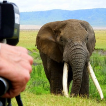 Ngorongoro Crater Elephant
