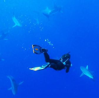 Black Tip Sharks