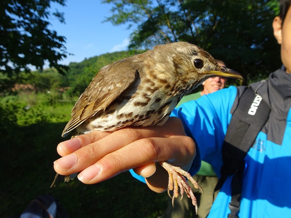 Bird perched on a hand