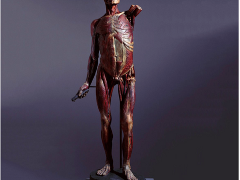 """""""The Anatomy Professor: Doctors, Death and Dining"""" at The Royal Academy - Review"""